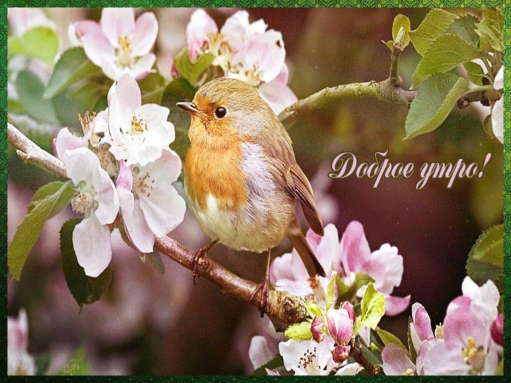 Картинки про весну и доброе утро гифки