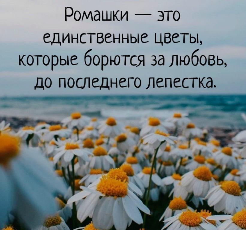фразы в картинках с цветами перезагрузки