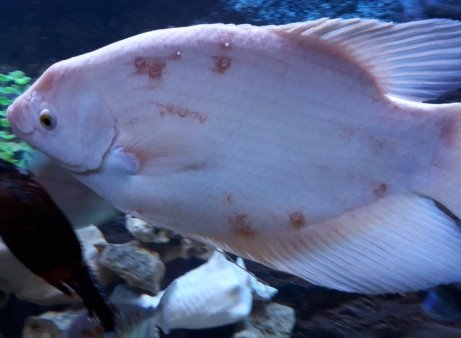форма фото рыбы клиник черта всей