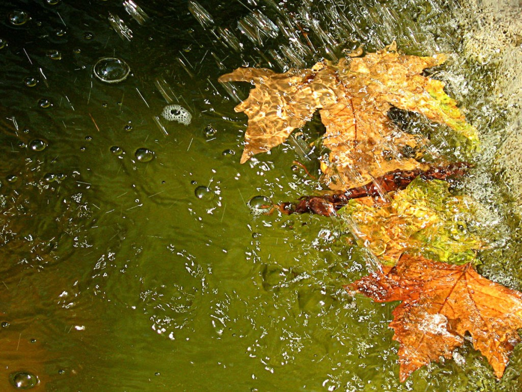 Картинка дождик осенью