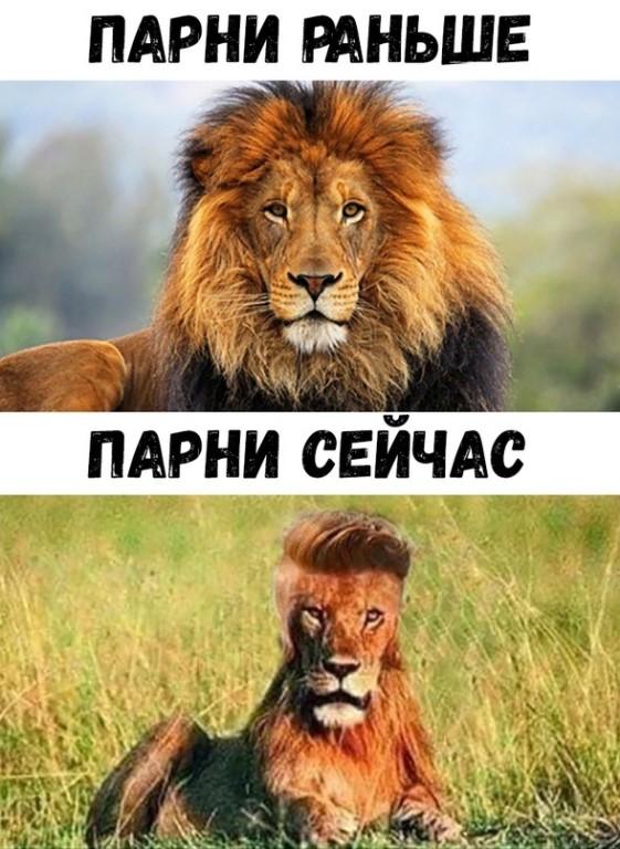это время картинки лев с надписью мужики тогда и сейчач жизнь ваша будет
