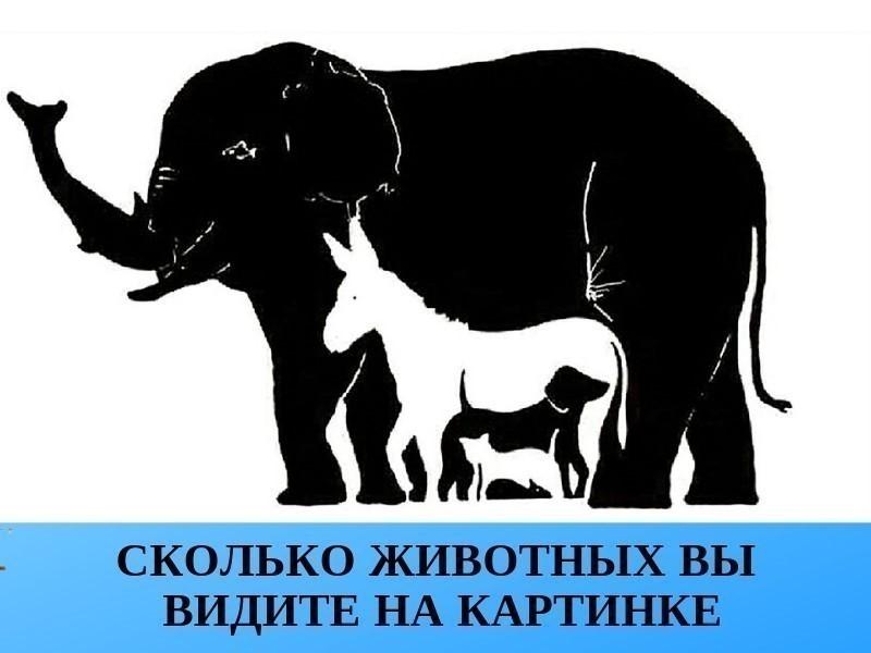сколько животных изображено на картинке придётся