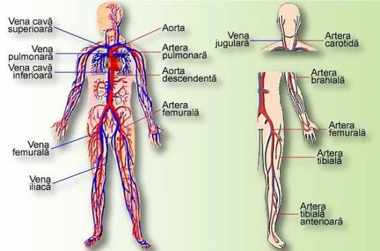 ce iarbă să bei din durerile articulare tratamentul reumatismului articulațiilor cu medicamente