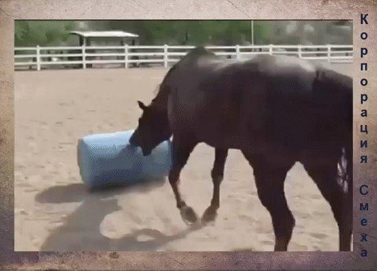 Смешные гифки с лошадьми, завтра