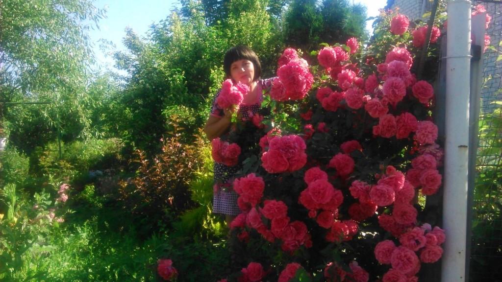 Интернет Магазин Садовых Растений Подворье