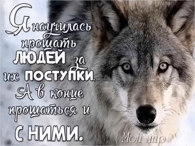 Картинки с волками надписями