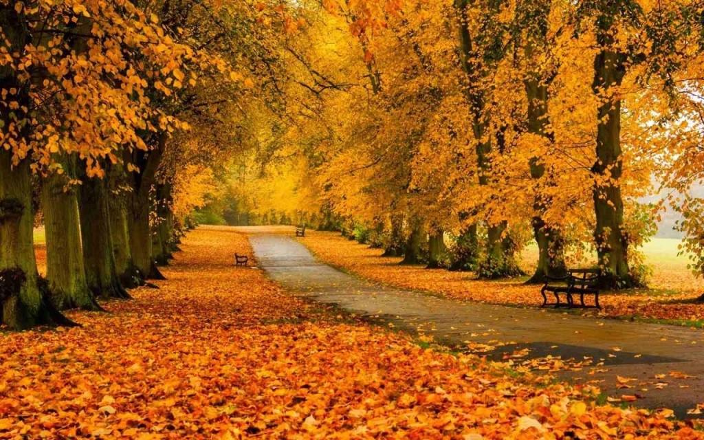 В старом парке царствовала осень,