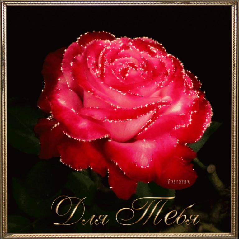 открытка с переливающимися розами школьные