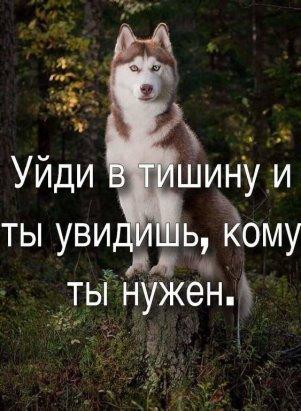 Волки тоже Боги