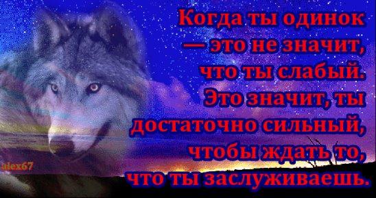 Картинка с волком и надписью никогда не сдавайся