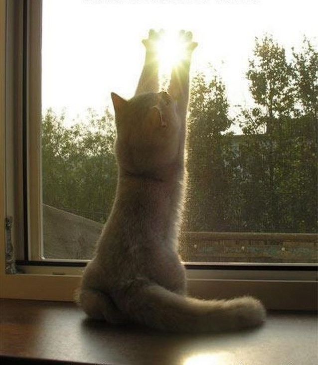 Открытки котик и солнышко, надписью