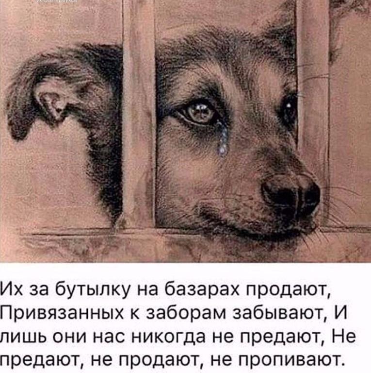 этого, грустные картинки бездомных животных до слез меня была бабушка