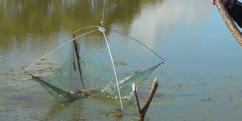 Кубань запрет на рыбалку