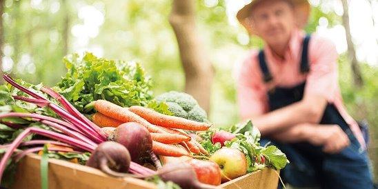 Причины отдать предпочтение фермерским продуктам