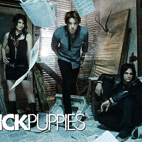 Sick Puppies fan-club