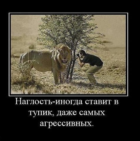 image?id=511757713206&t=0&plc=WEB&tkn=*-