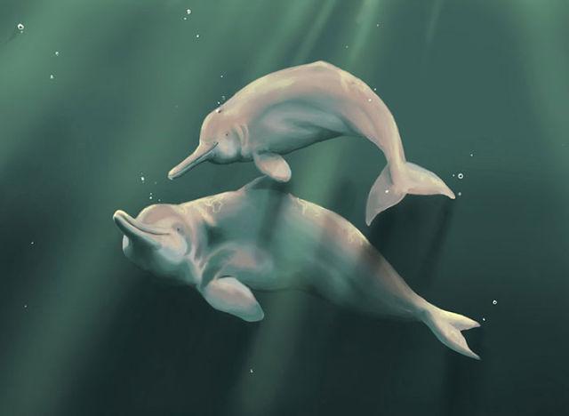 Image result for китайский речной дельфин фото