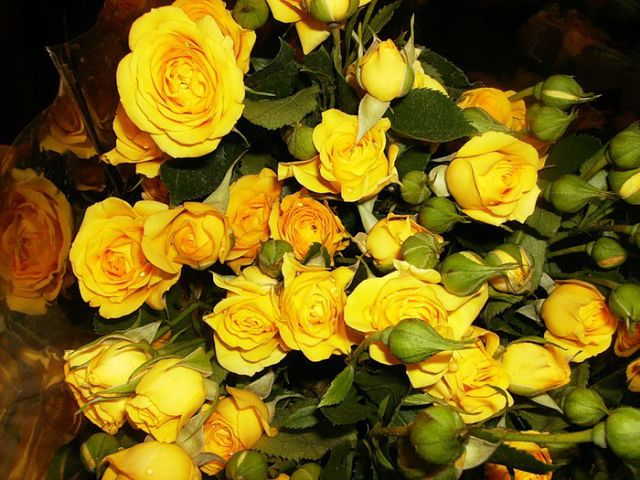 Скачать песни увяла роза на окне
