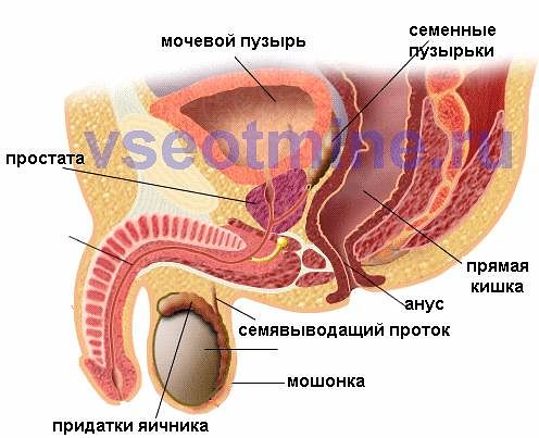 фото женский половой орган рыжий
