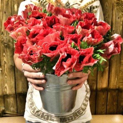 Заказать цветы в самаре через интернет, купить цветы в магазине лента