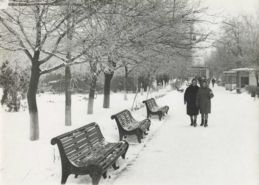 Аллея на Пионерской улице. 1972 год