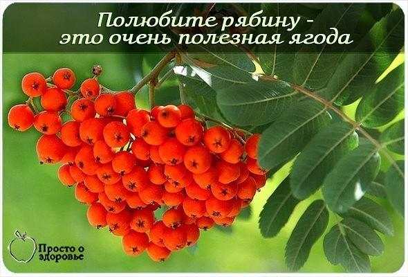 poka-foto-zrelih-vsya-v-soku-zhopi-muzhikov