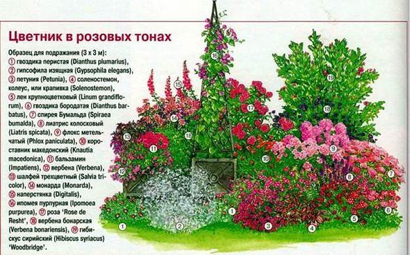 Схема как посадить цветы 416