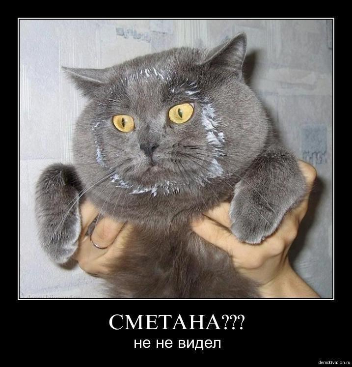 сметана и кот картинки