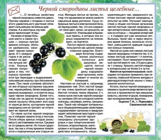 Лист черной смородины полезные свойства и