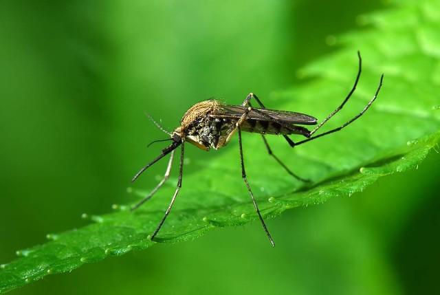 Картинки по запросу Народные методы отпугивания и устрашения комаров
