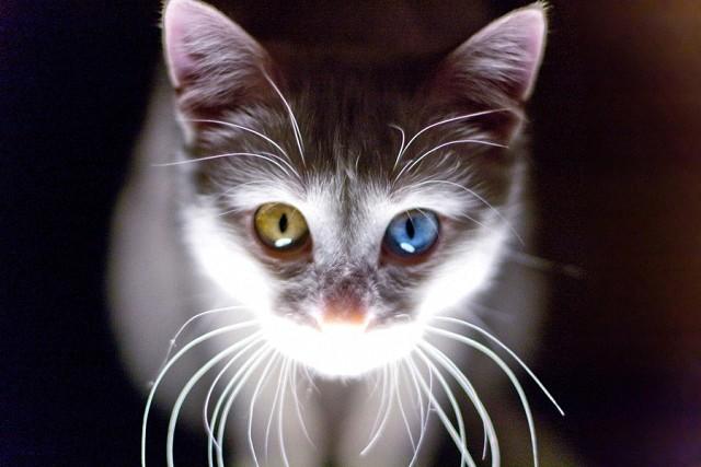 Картинки по запросу По степени психо-эмоционального воздействия на человека, кошки спасенные с улицы, обладают двойной магической силой!