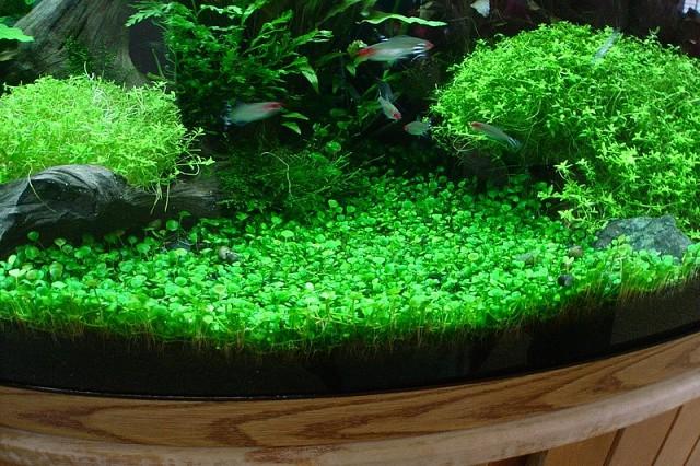Аквариумные удобрения для растений