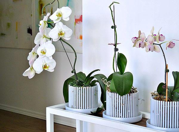 Картинки по запросу купить горшок для орхидеи