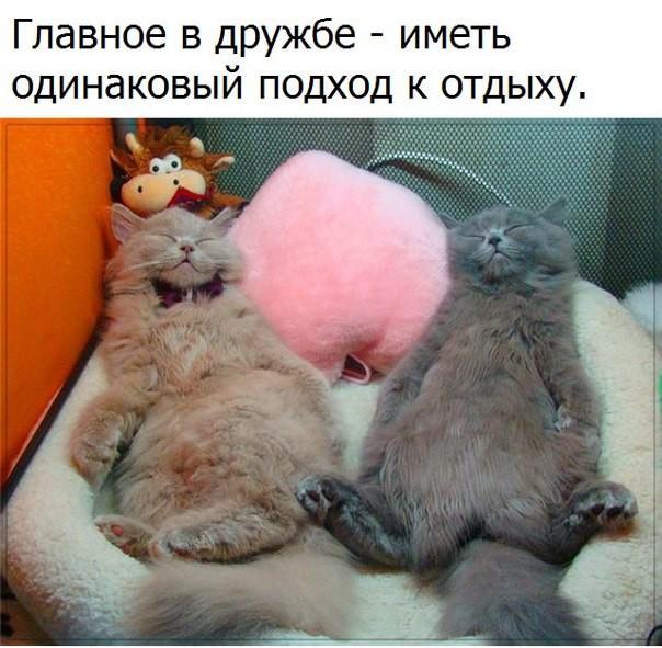 https://i.mycdn.me/image?id=839818687309&t=3&plc=WEB&tkn=*ptJ-PQtj9hJQCGZTAnuP4tT-fwM