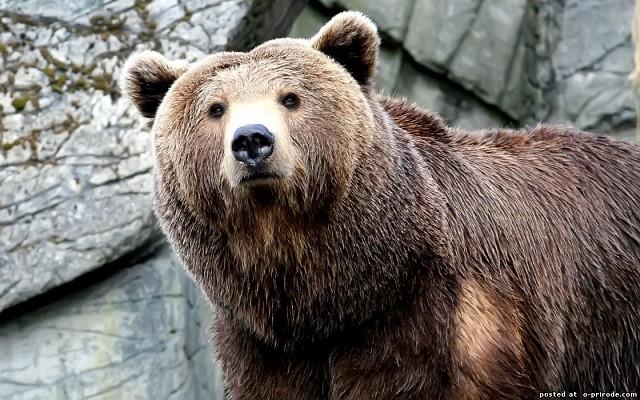 Один прыжок медведя до моей гибели Собака со свирепым лаем кинулась
