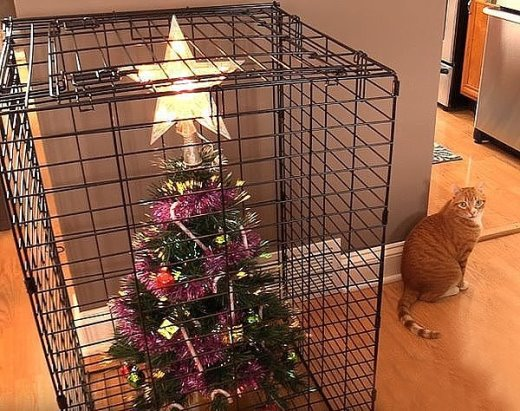 image?id=852931566430&t=35&plc=WEB&tkn=*capYi5_MUKq-SfgqwZIm1KyKoI0 - How to Protect Your Christmas Tree from Pets - Lifestyle, Culture and Arts