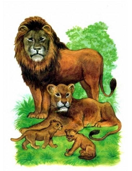 Руководителю, картинки с изображением животных жарких стран для детей