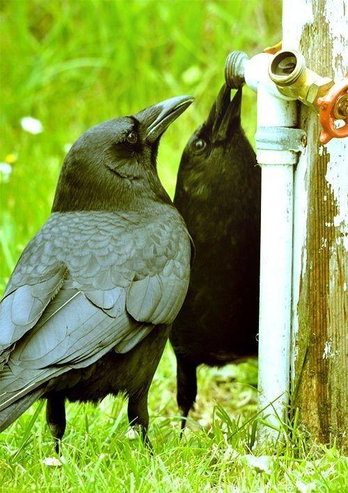 Ворона с большой дырой фото фото 331-171