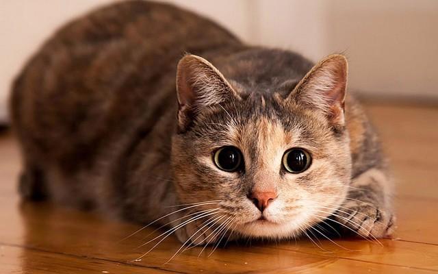 Картинки по запросу Кошка - индикатор кармы