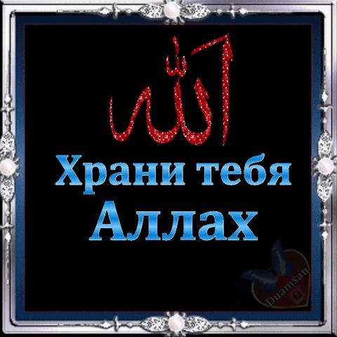 собаки открытка пусть хранит тебя аллах сенников