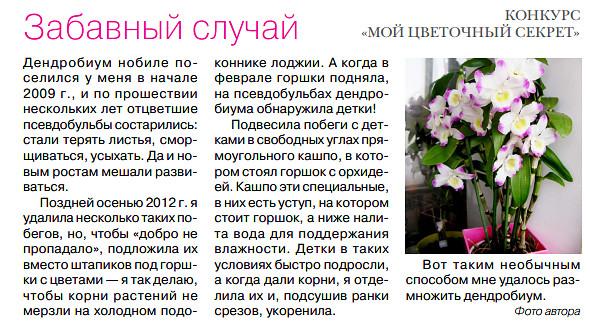 орхидея или фаленопсис - Страница 2 Image?id=855864488136&t=0&plc=WEB&tkn=*JDlkmvykXDRZP2I6DuCv-yLlyPk