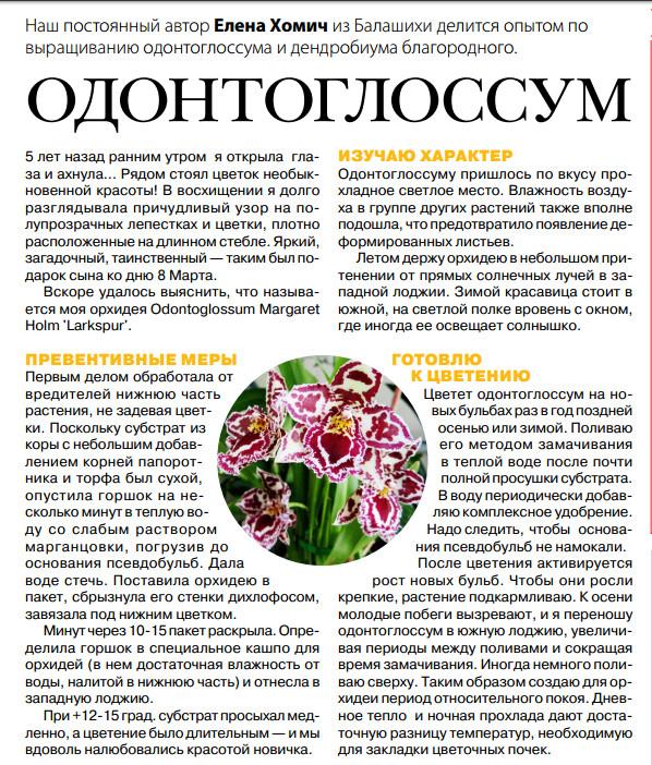 орхидея или фаленопсис - Страница 2 Image?id=855864514248&t=3&plc=WEB&tkn=*RcHHwLS0PUq6mdz80DXPDw3FSVM