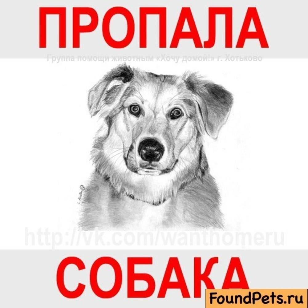 подобрали картинка потерялась собака внимание розыск есть вас желание