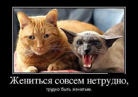 https://i.mycdn.me/image?id=856170476499&t=35&plc=WEB&tkn=*LTqcSP6Jw3nwFceUuHRlgrI7E_M