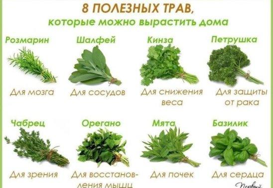 8 полезных трав