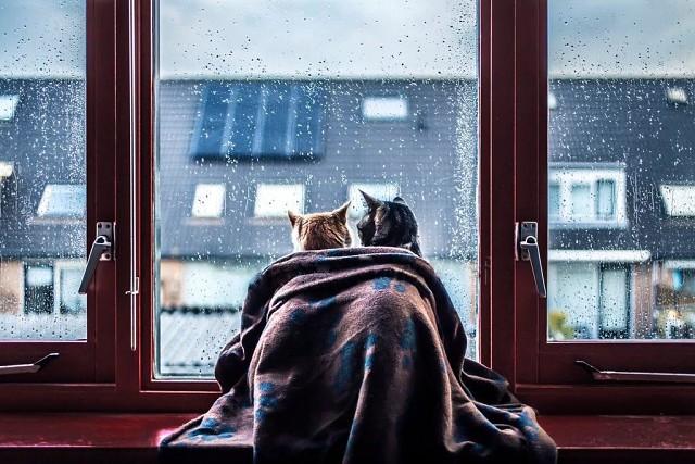 Тепло, уютно нам вдвоём. | OK.RU