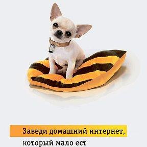 Знакомство Вязьма Богомаз Людмила