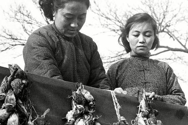 Картинки по запросу Китайско-воробьиная война фото
