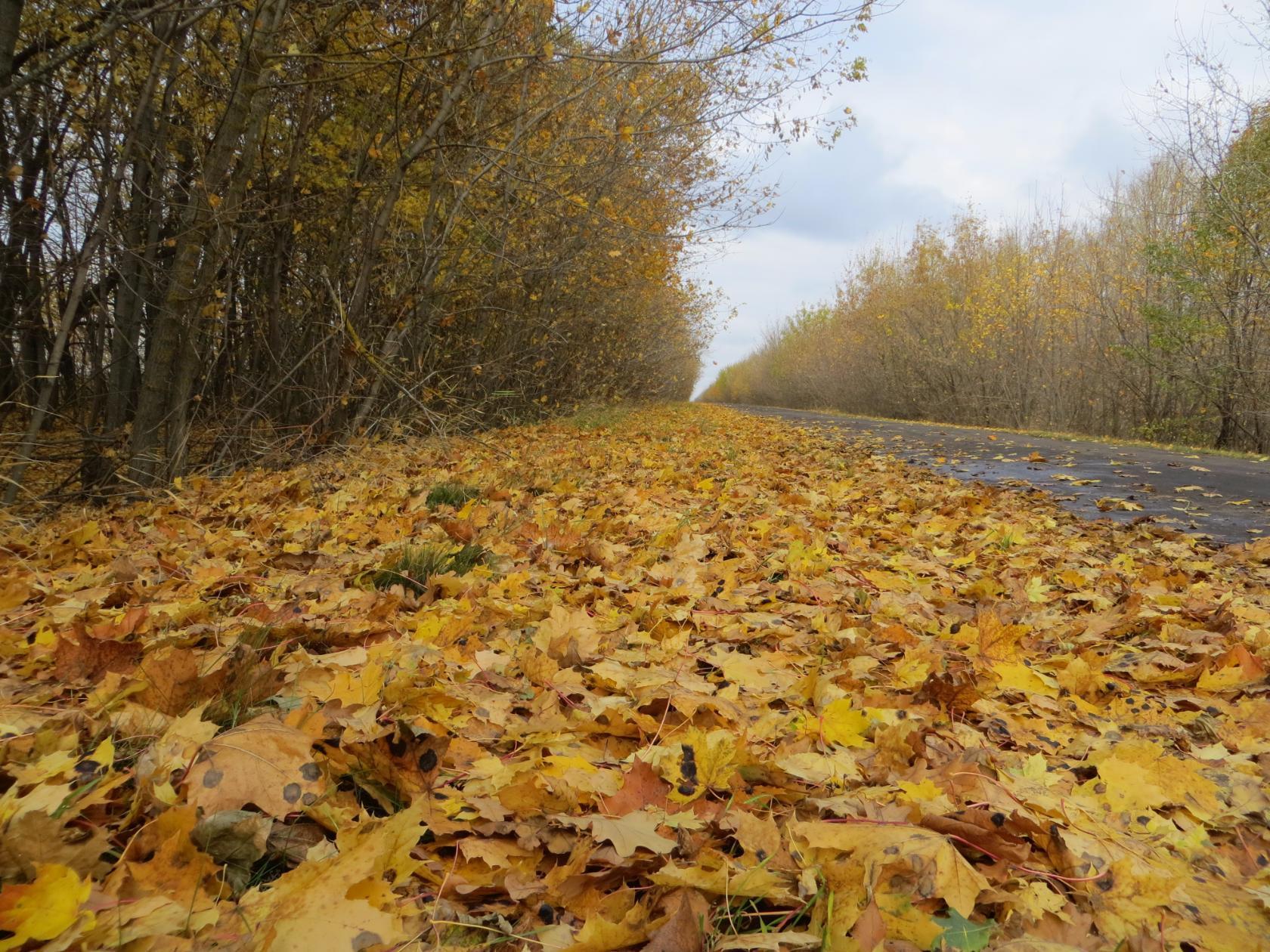 Открытка, картинки плохой погоды осенью
