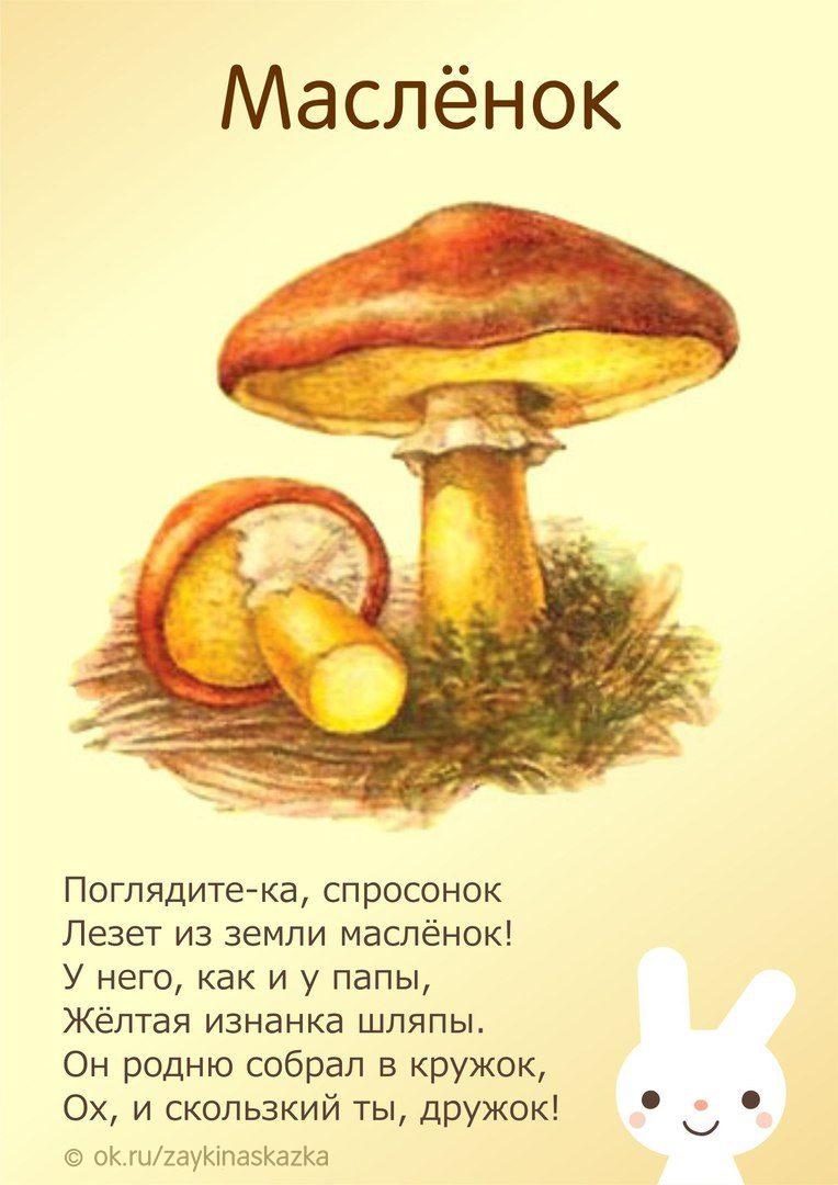 Картинки и загадки про грибы